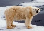 De Noordpool is weg!  Of toch niet?